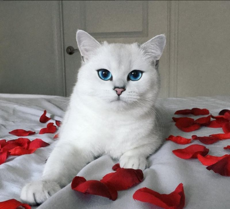 If cats could be valentines, then Coby would be on the top of our list.