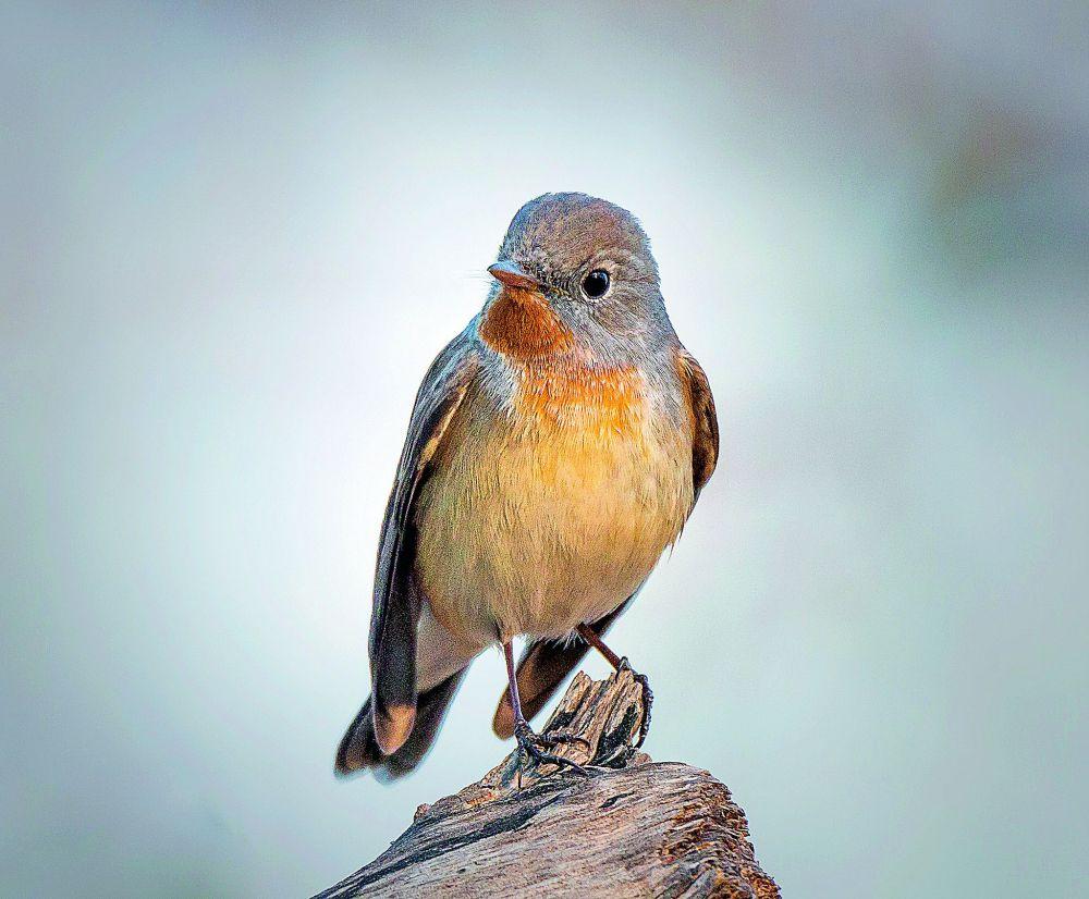 Actual Birds - Time Burglary 2 The Maxxx (Hatz Redux)