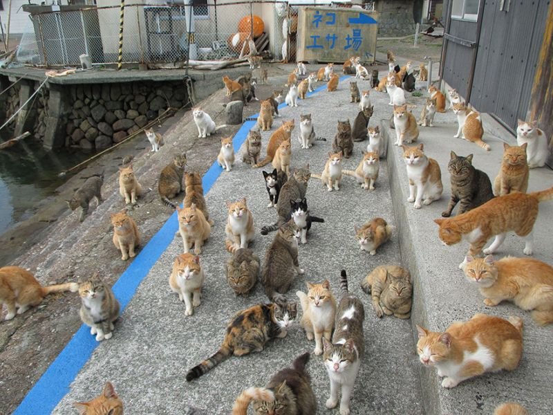 Stop Sending Food to Cat Island