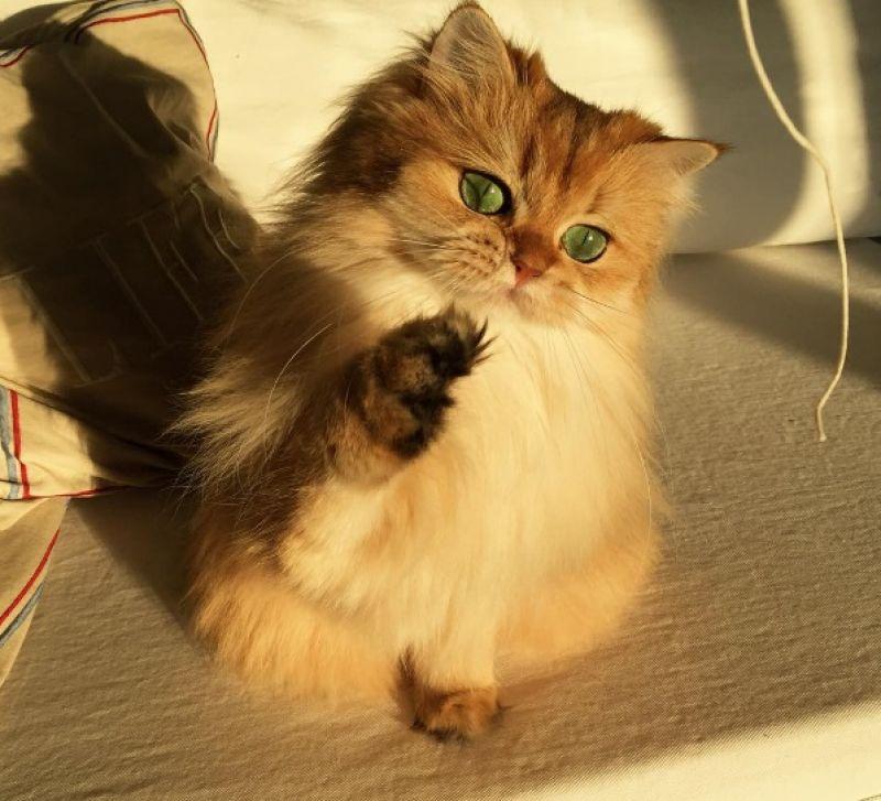 Cat Couldn T Scratch It