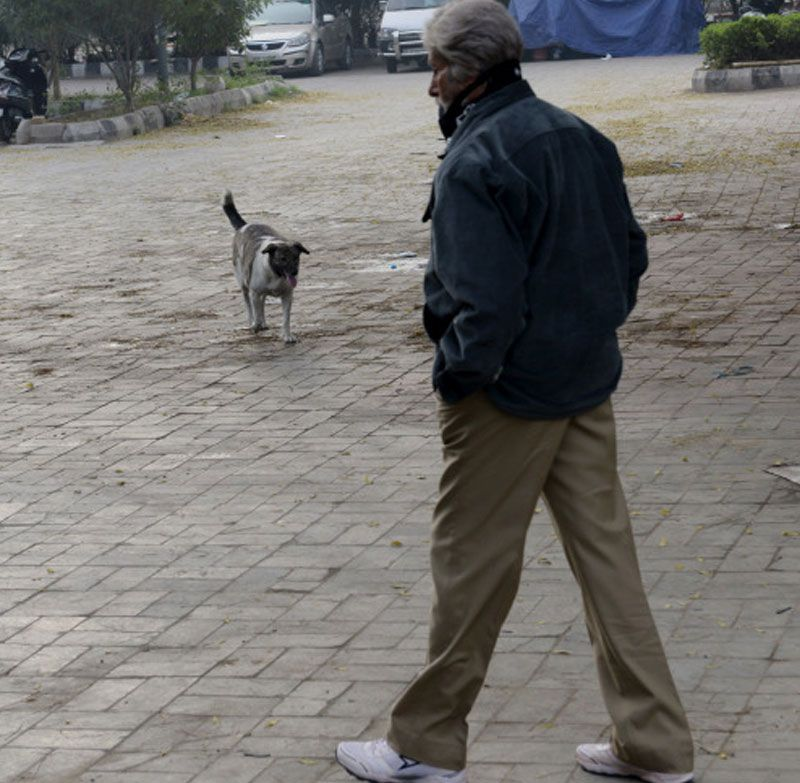 Amitabh joked that only a street dog managed to recognise him.
