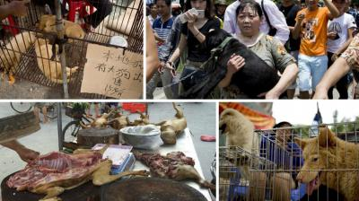 A city in southern China went ahead with an annual dog-meat eating festival despite heavy criticism and protests from animal rights activists.