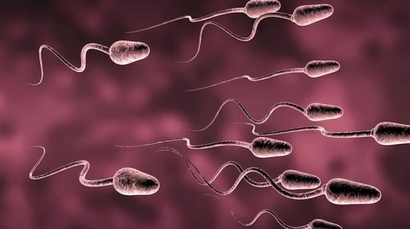 Doctors Say More Frequent Ejaculation Improves Sperm