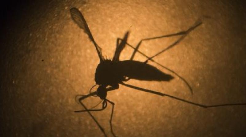 California Zika virus cases inch up to eight