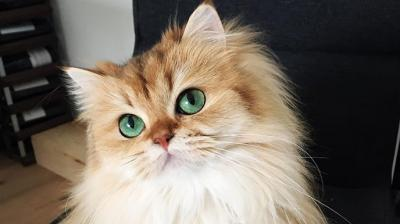 You might've heard about people who look like they were born to be in front of the camera but this feline has all the makings of a cat supermodel. Meet Smoothie who is probably the world's most photogenic cat. (Photo: Instagram/ @smoothiethecat)