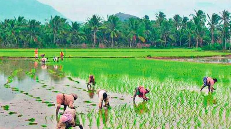 Image result for crop insurance tamil nadu