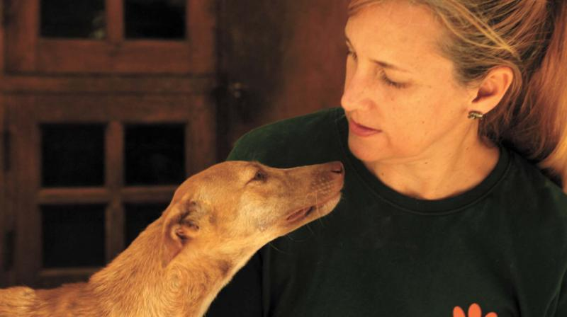 Mary petting a stray dog