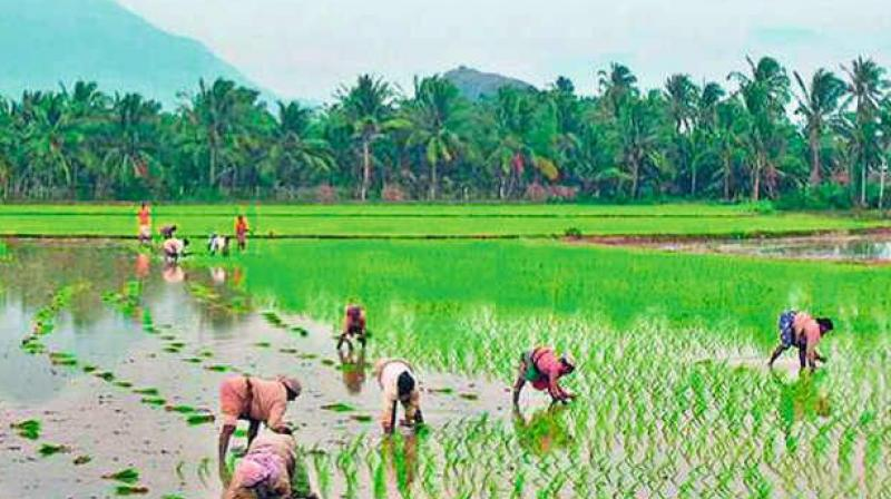 Cabinet okays MoU between India, Lithuania on agriculture cooperation