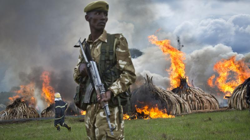 Eleven giant pyres of tusks were set alight as Kenya torched its vast ivory stockpile in a grand gesture aimed at shocking the world into stopping the slaughter of elephants.