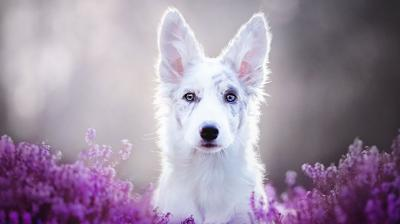 Polish photographer Alicia Zmyslowska has a knack of clicking the most beautiful and dreamlike photos of dogs you've ever seen. (Photo: Instagram)