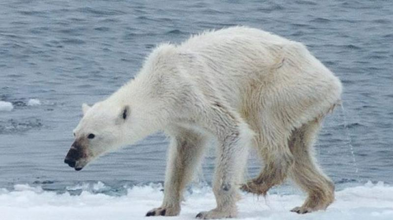 Climate Change Forcing Species To Move