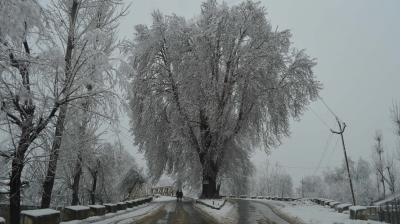 Intermittent snowfall continued in the upper reaches of Kashmir Valley even as mercury across the region plummeted by several degrees, intensifying the cold wave on Friday. (Photo: Showkat Dar)