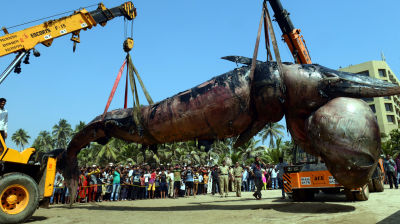 A 30-feet-long whale washed up at the Juhu beach in Mumbai on Thursday night. The whale is said to weigh three-four tonnes.