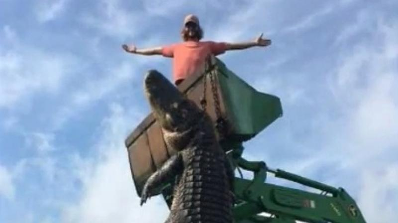 Florida hunters kill massive alligator they say was eating their cattle