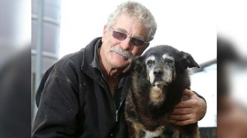 World's 'oldest dog' Maggie dies peacefully, sleeping in her basket