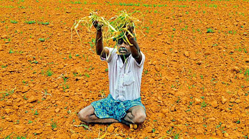 How economically prudent are farm loan waivers?