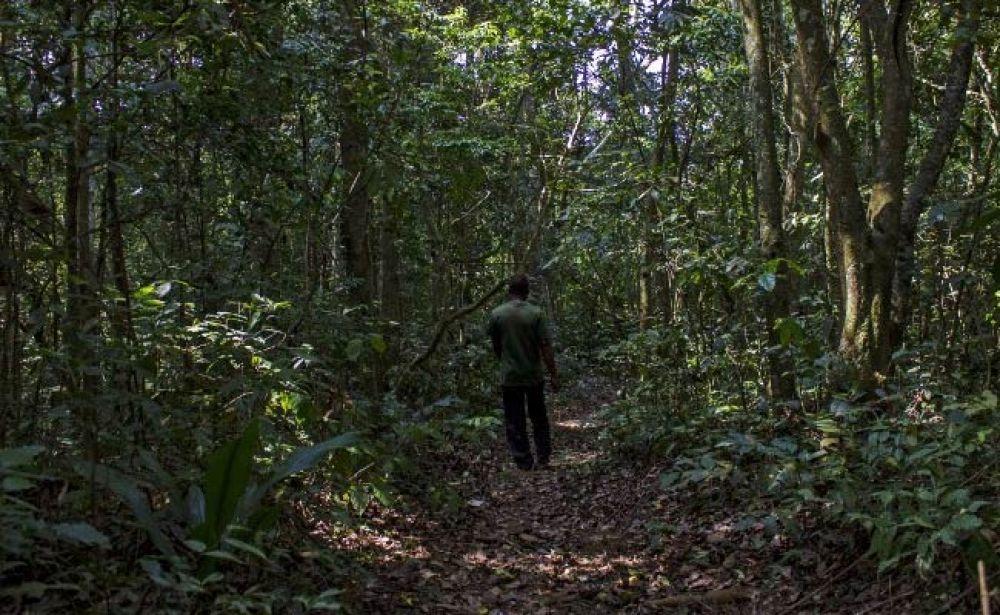 Zika Forest, Uganda (Photo: AFP)