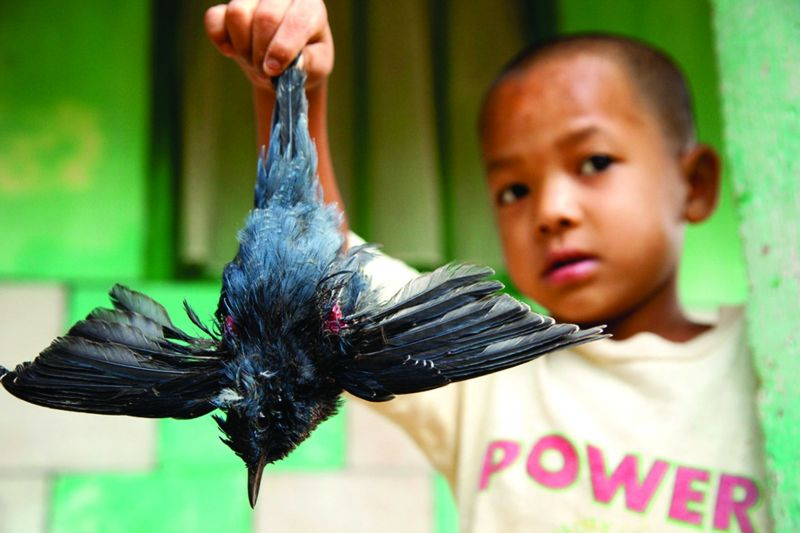 A boy from Meghalaya showing Sandesh a blue whistling thrush that he had shot with a catapult that morning
