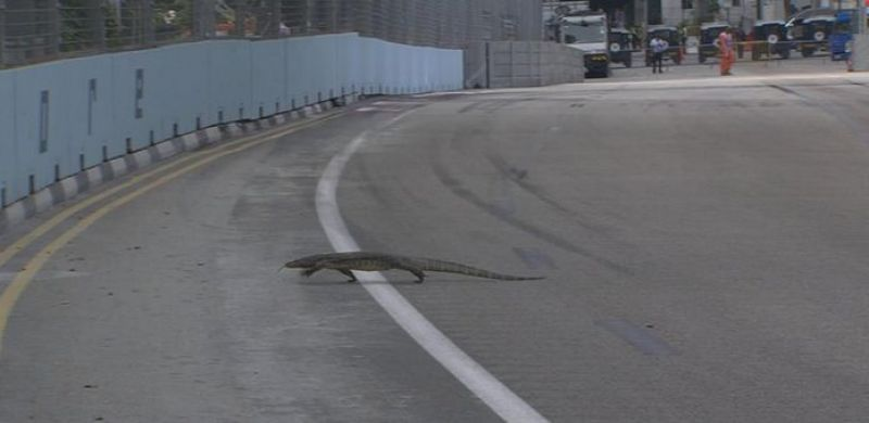 A lizard was spotted on the track in the Singapore GP, furing the free practice sessions. (Photo: Twitter)