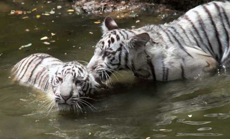 zoo hit by polluted water