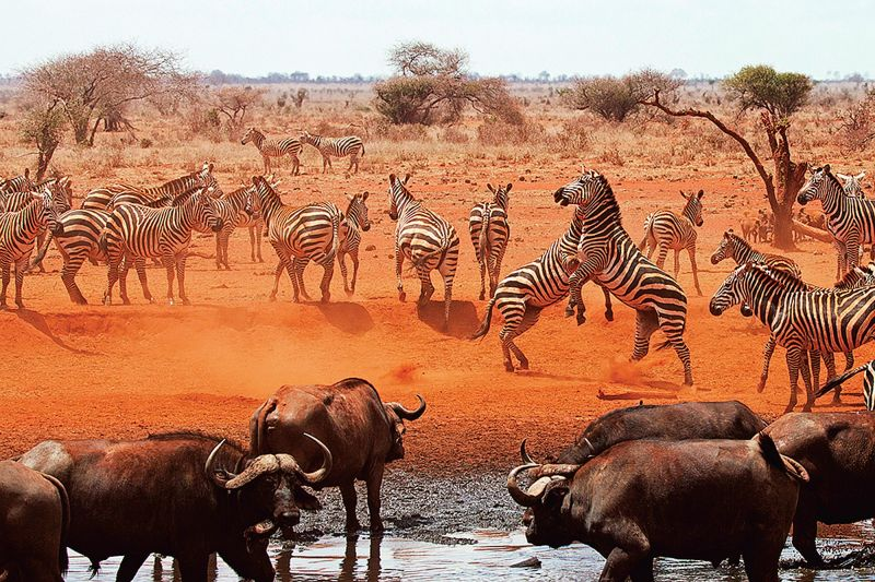 The animal kingdom in Kenya, Africa