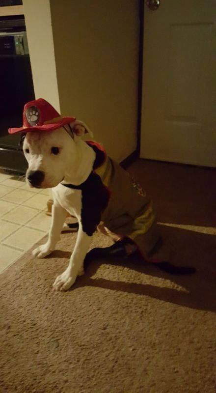 Puppy Jake was made an official member of the Hanahan Fire Department team in December. (Photo: Facebook)