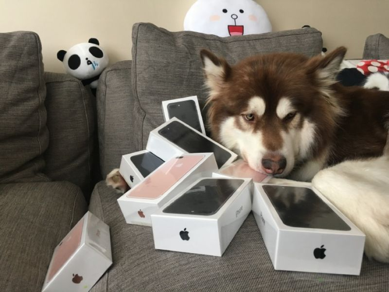 dog owns iphone 7
