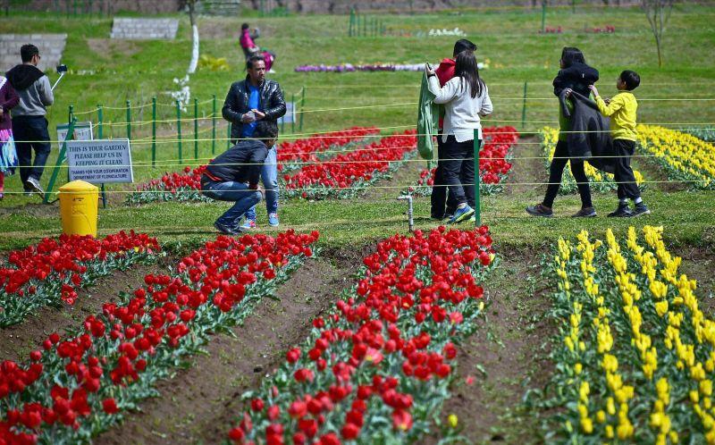 Image result for Indira Gandhi Memorial Tulip garden