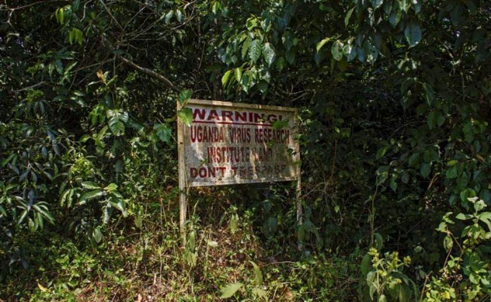 Entrance to Zika forest, Uganda (Photo: AFP)