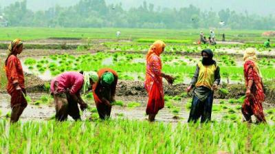 "Delay in sowing of Kharif crops is a cause of concern. There is still time for farmers to complete sowing operations,"" Agriculture Minister Narendra Singh Tomar told reporters on the sidelines of State Agriculture Ministers conference. (Photo: Representational Image/PTI)"