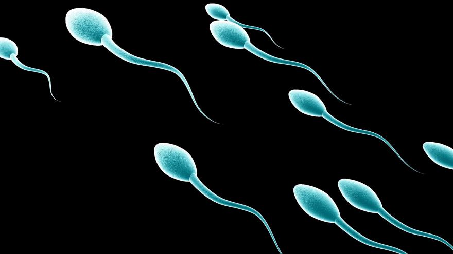 New \'spermbots\' to boost fertility treatments: study