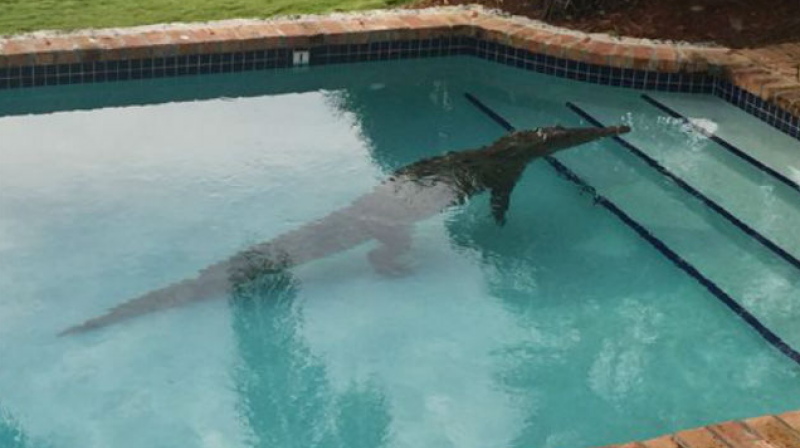 In this photo provided by the Monroe County Sheriff's Office, a crocodile swims in a privately owned pool in Islamorada, Florida. (Photo: AP)