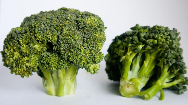 The study shows that in mice the number of cancer nodules and the size of the cancer nodules increased in the liver. But when broccoli was added to the diet, the number of nodules decreased. (Photo: Pixabay)