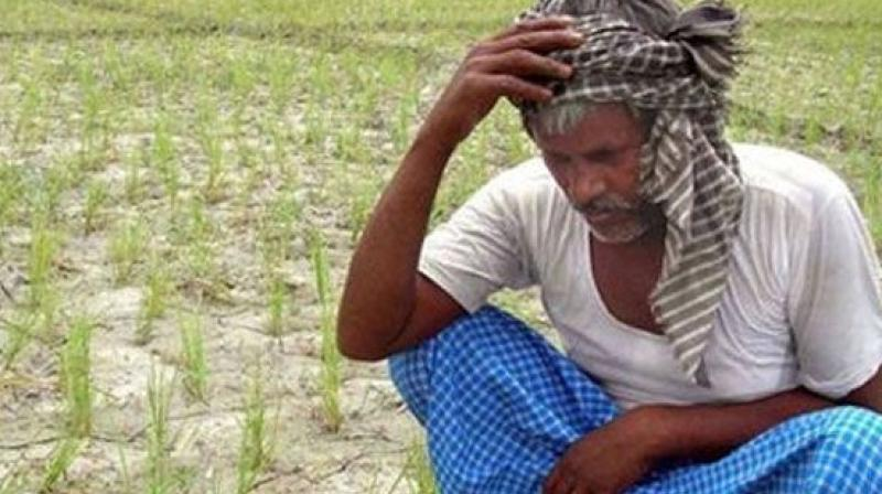 As many as 14 farmers have committed suicide in the last two months in the district. Some of them were just below 30 years of age. (Representational image)