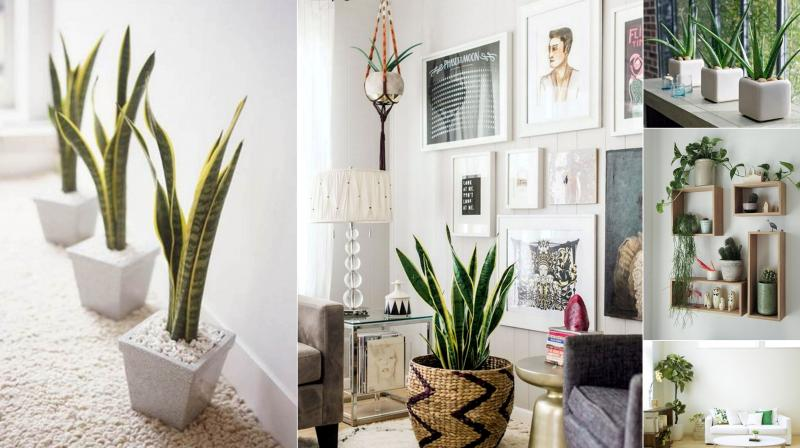 6 creative ways to include indoor plants into your home d cor for Plant decorations home