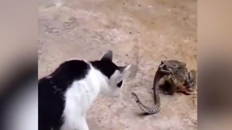 Watch: This snake gets into a fight with a cat while being eaten