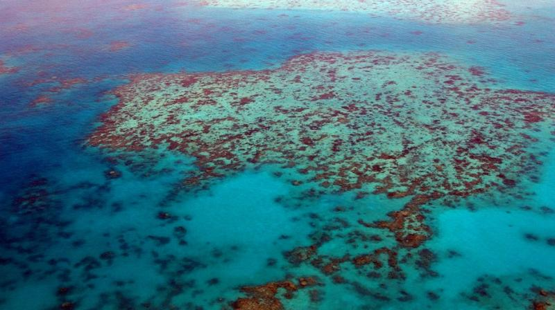 93 Per Cent Of Great Barrier Reef Hit By Coral Bleaching