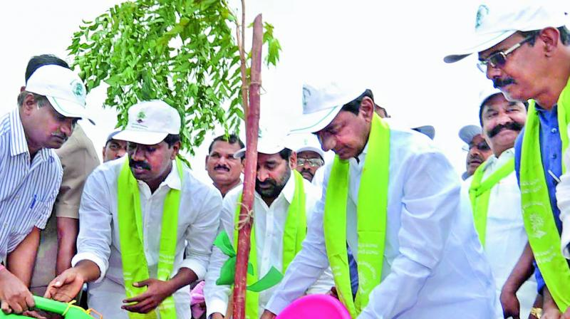 essay on mission kakatiya and haritha haram