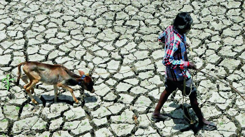 The timely assistance to farmers ensured that in spite of two successive droughts, the overall agriculture production has not dipped and food stocks are adequate. (Representtaional Image, Photo: PTI)