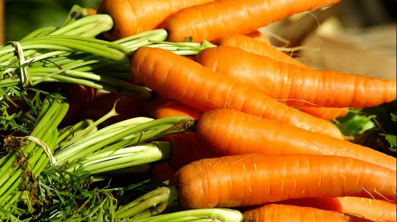 Laying bare the humble carrot's genetic secrets will make it easier to enhance disease resistence and nutritive value in other species, the researchers said.
