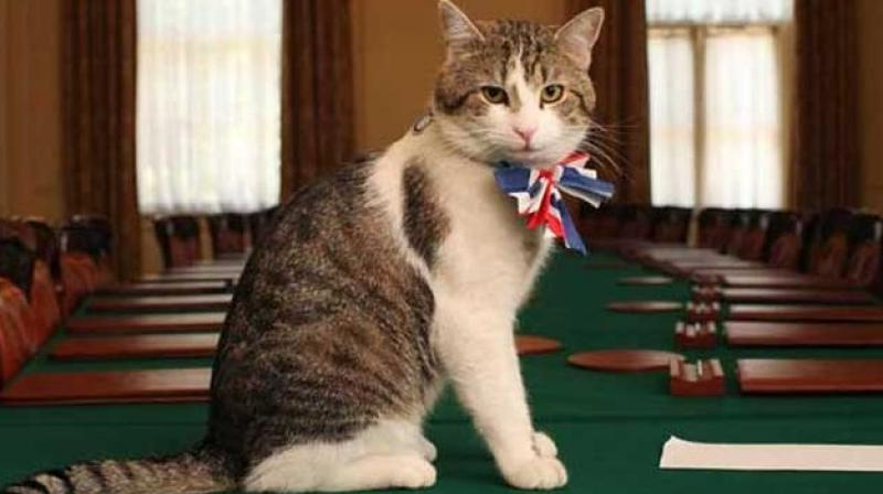In 2011, the British Prime Minister's home, Number 10 Downing Street, had employed a cat named 'Larry' to kill rats. (Photo: Twitter)