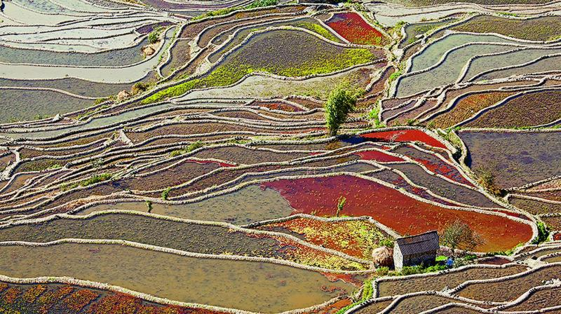 A rice terrace in China