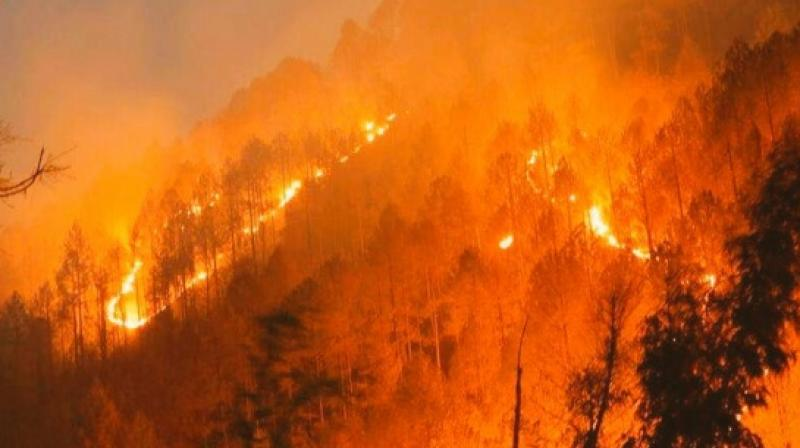 More forest fire in 4 months this year