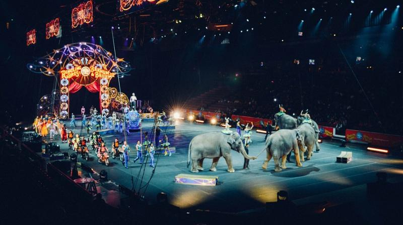The bill is modeled on a similar San Francisco law that prohibits the performance of wild or exotic animals for public entertainment or amusement. (Photo: Pixabay)