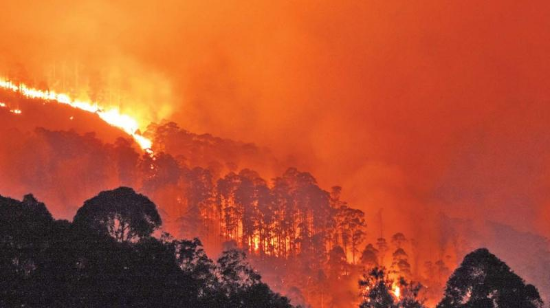 Fire destroys forest cover in Perumal Malai at Kodaikanal, Dindigul district on Monday night. (Photo: DC)