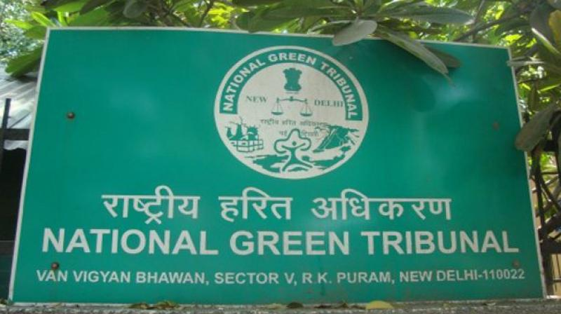 National Green Tribunal (Photo: PTI)