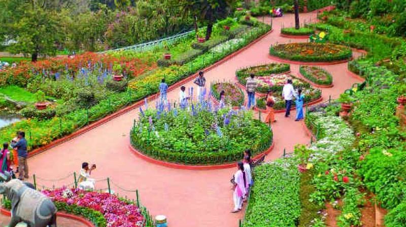Hyderabad Botanical Garden Road Dark