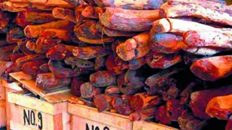 Red sanders seized at Vallarpadam
