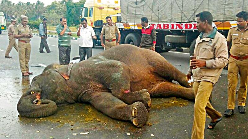 Karnataka: Tamil Nadu bus crashes into elephant