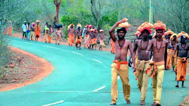 They would, at times, venture into nearby villages abutting the forest lines in search of water and cause panic among the villagers.(Photo: DC)